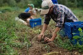 Domani sit-in dei lavoratori agricoli dinanzi la Prefettura